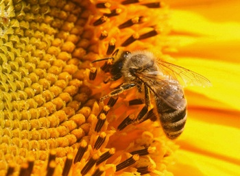 Лечение болезни Паркинсона пчелами: варианты и степень их эффективности
